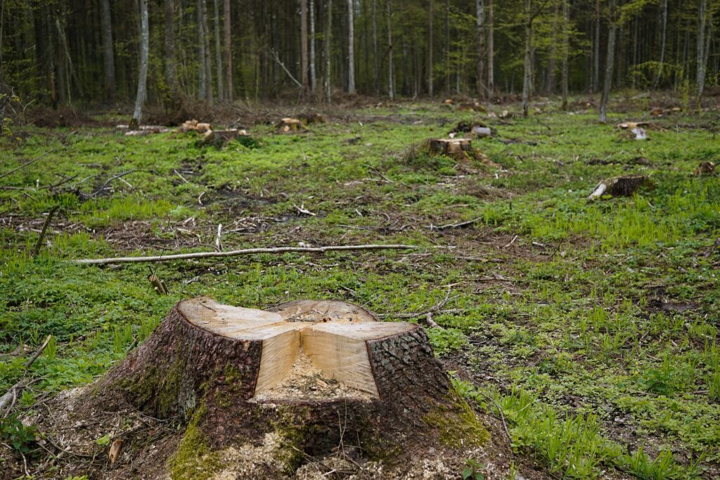 Адвокат по статье 260 УК РФ Незаконная рубка лесных насаждений в Москве и РФ, стоимость услуг адвоката
